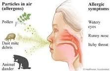 Cara Cepat Sembuhkan Alergi Debu